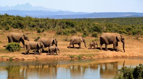 elephant-279505_1920.jpg
